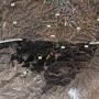 Yatirskogen vid Negevöknen